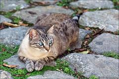 valldemossa (heavenuphere) Tags: valldemossa mallorca majorca balearicislands islasbaleares spain espana island europe cat 24105mm