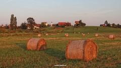 Golden fields of my homeland (malioli) Tags: bundle hay village landscape hill croatia hrvatska europe canon