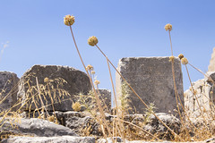 Lindos Akropolis ancient Greek and plants (ir0ny) Tags: rhodes greece lindos acropolis akropolis lindosacropolis lindosakropolis greek ancient ancientgreek temple greektemple ruins ancientruins lindian plants