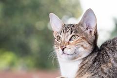 javacatscafe12Aug20180110.jpg (fredstrobel) Tags: javacafecats javacatscafe pets atlanta animals usa cats places ga georgia unitedstates us