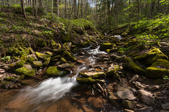 Light in the Creek (Ken Krach Photography) Tags: westvirginia monongahelanationalforest