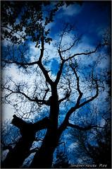 神依木...II (SHADOWY HEAVEN Aya) Tags: 18051790a0226 sacredtree trees tree 神依木 御神木 神木 sky 空 picsjp phosjapan igersjp igers tokyocameraclub hokkaido japan coregraphy 写真の奏でる私の世界 写真撮ってる人と繋がりたい 写真好きな人と繋がりたい ファインダー越しの私の世界 日本 北海道