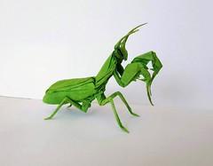 Praying Mantis (orig4mi.) Tags: prayingmantis origami paperfolding