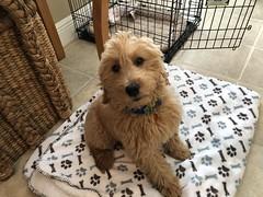 Ginger's beautiful Bailey!