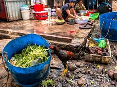 Hon May Rut, Phu Quoc, Vietnam (Kevin R Thornton) Tags: chicken phuquoc galaxys8 asia travel people mobile samsung animal vietnam honmayrut kitchen thànhphốphúquốc tỉnhkiêngiang vn