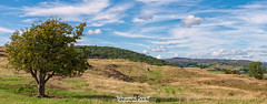 9th August 2018 (Rob Sutherland) Tags: hawthorne tree colton hill cattle farm farming agriculture agricultural upland traditional rural lakes lakeland lakedistrict cumbria cumbrian england english uk britain british