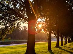 morning run (ekelly80) Tags: dc washingtondc august2018 summer nationalmall morning view morningrun runview sun sunrise light morninglight glow trees shadows golden