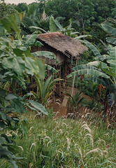 Muyu-Mandobo-001b (Stichting Papua Erfgoed) Tags: stichtingpapuaerfgoed pace pietvanmensvoort msc papua nieuwguinea nederlandsnieuwguinea irianjaya papuaheritagefoundation voormalignederlandsnieuwguinea irianbarat anthonyvankampen