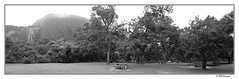 picnic area (harrypwt) Tags: harrypwt abuja nigeria samsungs7 s7 framed borders monochrome bw nature green africa trees panorama panoramic bench picnic
