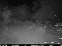 2018-06-24 04:33:56 - Crystal Creek 1 (Crystal Creek Bowhunting) Tags: crystal creek bowhunting trail cam