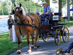 Pour une jolie balade ! (jean-daniel david) Tags: cheval chevaldetrait calèche rivière lathièle yverdonlesbains suisse suisseromande vaud animal personne brun bleu eau arachnide chemin jaune roue