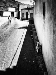 (Adisla) Tags: olympus penf mzuiko 17mm f18 bn ciudad humano dalias perro