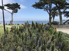 20180618_211641048_iOS (jimward85) Tags: montereybay pacificgrove california loverspoint