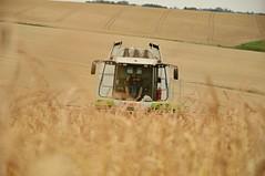 DSC_8098 (anetaležáková) Tags: summer sunset summerharvest sunnydays harvest agriculture agriphoto czechagri caseihpuma case casepuma165 caseoptum casepuma200 claas claaslexion newholland