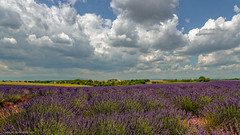Beautiful lavender fields in Valensole, France (jkowalski2) Tags: citiesorplaces côtedazur europe events france stockcategories travel vacation valensole fra