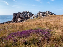 Heather and Rocks (Gijs Peijs) Tags: rock landscape blossom rotsen bloei bretagne rocks bluesky plougrescant meadow ocean landschap kliffen cliffs frankrijk heide klif oceaan heather france cliff legouffre