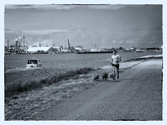 Jogging (Fouquier ॐ) Tags: harbour dogs boat industry canal schelderijnverbinding mono monochrome blackandwhite antwerp belgium