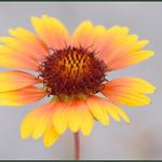 Summer Flowers thumbnail