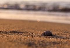 Findings (jocsdellum) Tags: shell concha petxina mar sea morning mañana sunrise bokeh agua water arena sand sorra golden luz llum light intheearlymorning
