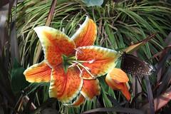 Farfalla (RobAnt57) Tags: farfalla