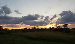 African Sunsets (Rckr88) Tags: wolwespruitnaturereserve northwestprovince southafrica wolwespruit nature reserve north west province south africa african sunsets africansunsets africansunset sunset sun sunlight cloud clouds cloudy outdoors travel