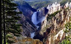Yellowstone's Lower Falls, (Bernard Spragg) Tags: yellowstoneslowerfallsusa america lumix usa waterfall scenery travel nationalparks natural wyoming unitedstates soe