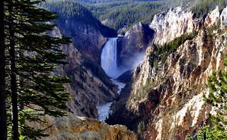 Yellowstone's Lower Falls,