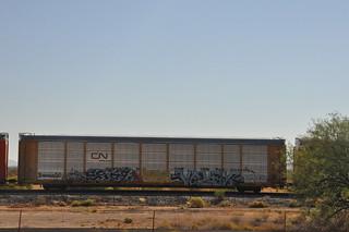 DSC_0106 (1)