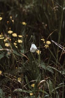 Butterfly on flower | Sony a7 mark III