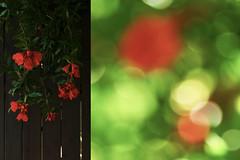 MMM Sharp/Blurry (Carrie McGann) Tags: hmmm mosaicmontagemonday mosaic montage sharpblurry blossoms pomegranateblossoms bokeh 062518 nikon nikond850 interesting