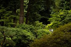 Geishas in the Forrest (MarkE_T) Tags: smcpentaxf35135mmf3545 portland washingtonpark portlandjapanesegarden geisha pentax pentaxk1 forrest