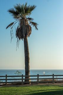 Palm & Boat
