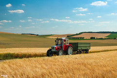 Harvest time in Austria | STEYR // FUHRMANN (martin_king.photo) Tags: harvest harvest2018 ernte 2018harvestseason colza grain austria österreich fuhrmann fuhrmanntrailer vintage old oldmachine man summerwork powerfull martin king photo machines strong agricultural greatday great czechrepublic welovefarming agriculturalmachinery farm workday working modernagriculture landwirtschaft martinkingphoto moisson machine machinery field huge big sky agriculture tschechische republik power dynastyphotography lukaskralphotocz day fans work place clouds blue yellow gold golden landscape landschaft landwirt landmachinen ontheroad road eos country lens rural camera outdoors outdoor steyr8090turbo steyr8090 turbo steyr steyrtraktoren steyrtractors scenery