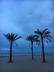 Cullera (Valencia, España) (MarisaTárraga) Tags: españa spain valencia cullera playa beach agua water arena sand palmera palmtree iphone6s naturaleza nature verano summer
