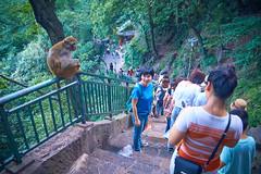 第一天贵州 - 黔灵公园 25 (C & R Driver-Burgess) Tags: crowd steps public path forest primate monkey bokeh feeding drinking baby fence rails bottle tamronspaf2875mmf28xrdildasphericalif