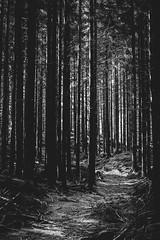 I den mörka skogen... (anhbg) Tags: forest skog träd trees dark blackandwhite blackwhite svartvitt wood