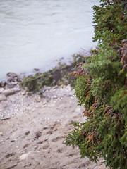 jasper 2017 007 (adamlucienroy) Tags: jasper jaspernationalpark nationalpark forest gh4 panasonic telephoto leica primelens prime 25mm f14 alberta edmonton yeg yegdt canada