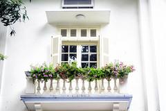 On a balcony (Tài Trần) Tags: garden flower plant hanoi vietnam street