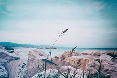 Adriatic Sea, 2018 (Seems every path leads me to nowhere) Tags: sea seaside shore seashore seascape landscape composition view scenery wind nature delicate photography fineartphotography travel travelphotography rocks stones plant windy vignette seaview water waterscape waves beach harbor adriaticsea adriatic seas colorphotography contrast