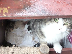 feral *update* (buckaroo kid) Tags: london uk cat feral kittens rescue rehome celiahammond