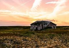(Angela Vezina) Tags: abandoned sunset goldenhour flickr nature flower pink quebec digital nikon entryisland summer