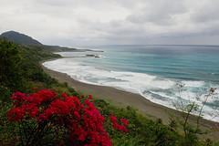 coup d'oeil répertorié (8pl) Tags: roses plage plagedesable vagues écume taïwan 金樽遊憩區 côteest végétation verdure eau mer