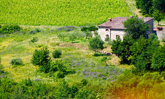 Castellina in Chianti, Tuscany - lovely place (Michele Ginolfi) Tags: green tuscany chianti italy wine landscape house summer light sun trees plant nature geometries colour toscana italia castellina casa mattoni alberi piante natura verde colori lavanda vigneti