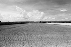 Die Hitze des Sommers (Manfred Hofmann) Tags: 500px analog brd jahreszeiten kurpfalz orte projekte flickr öffentlich