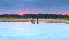 Morning Refreshment (nicklucas2) Tags: landscape newforest cloud heather tree water drought slufters pond pony