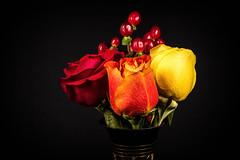 Three Roses (kenlstites) Tags: