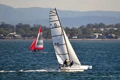 800_4949 (Lox Pix) Tags: queensland qld australia catamaran trimaran hyc humpybongyachtclub winterbash loxpix foilingcatamaran foiling bramblebay sailing race regatta woodypoint boat