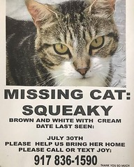 Ridgewood: Look out for lost Squeaky. 68th Road and 60th Street. Contact number if you see her! (Jimmy Legs) Tags: ridgewood look out for lost squeaky 68th road 60th street contact number if you see her