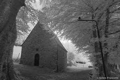 Chapelle Sainte Anne des Pouhons (gillesfrancotte) Tags: 2018 ardennes belgium february forêt ir kenkor72 outdoor pouhon sainteanne bush chapel chapelle forest infrared infrarouge landscape longexposure nature paysage summer tree undergrowth underwood wood aywaille wallonie belgique be