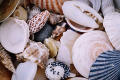 Shells🐚 (kimkullman) Tags: jersey new beach ocean sand pretty detail 40mm nikon micro macro shells